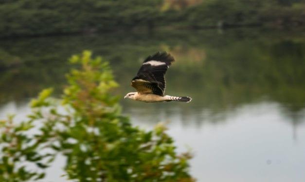 Observação de aves: 7 dicas para praticar Birdwatching