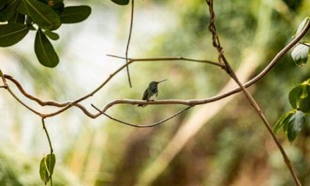 Observar aves: 7 dicas para praticar a atividade com segurança
