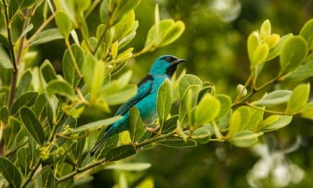 Pássaros de Santa Catarina: 4 lugares para encontrar espécies raras