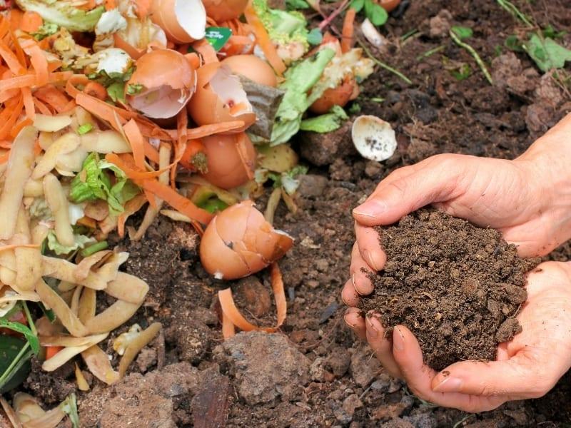 compostagem e sustentabilidade